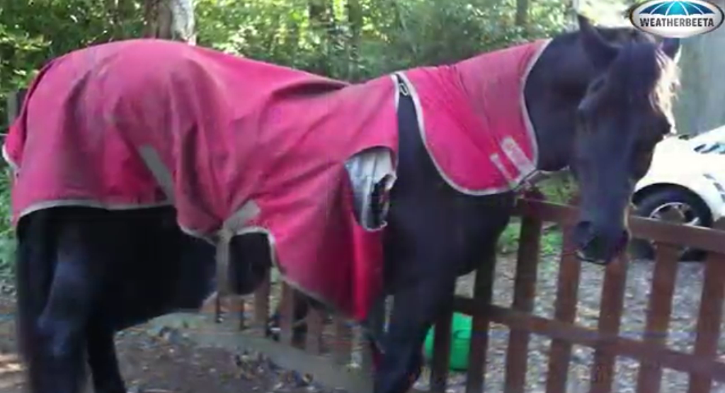 Horse Rug Cleaning Ripped Blanket